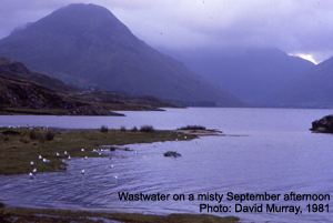 Wastwater - David Murray, 1981